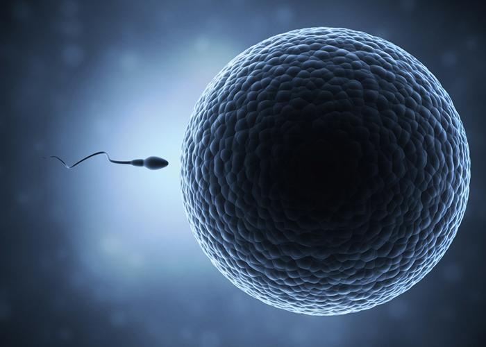 たった1つの精子が卵子に出会う神秘的な絵|不妊治療HP