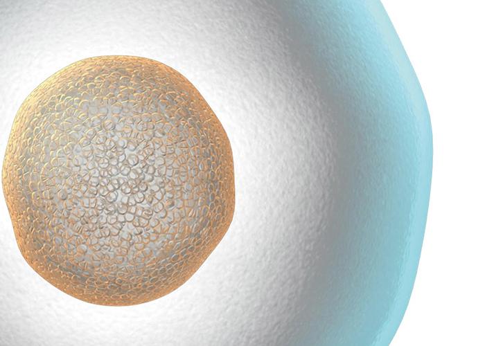 卵子の神秘的な絵|不妊治療HP
