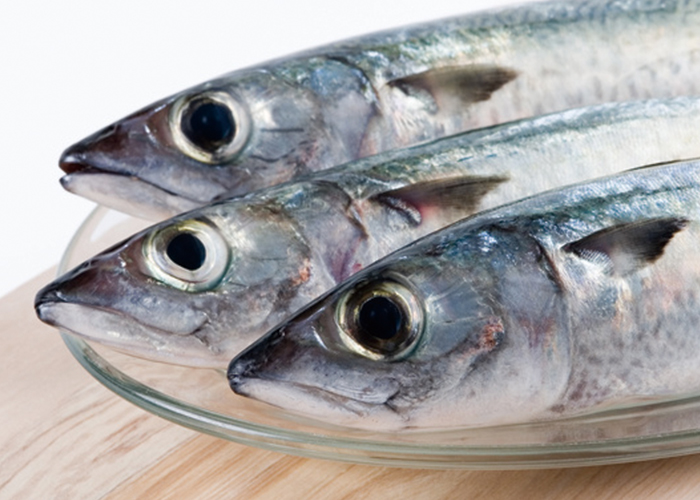 3匹の鮮魚|不妊治療HP
