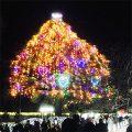 中山競馬場のクリスマスツリー|不妊治療HP