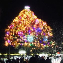 高齢ママに送る子育て日記【20】|クリスマスツリーを見に「中山競馬場」へ