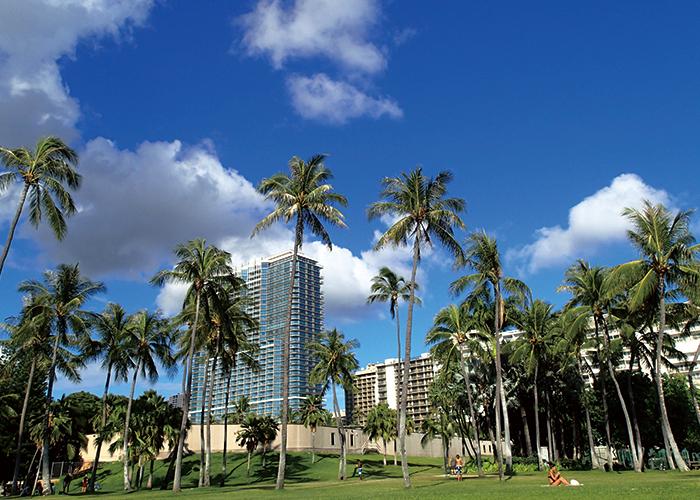 ハワイのヤシの実と青い空|不妊・マタニティHP